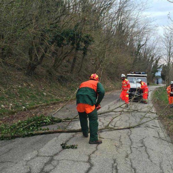 Persone Protezione Civile vestite di arancione che tagliano un ramo caduto sulla strada Protezione Civile